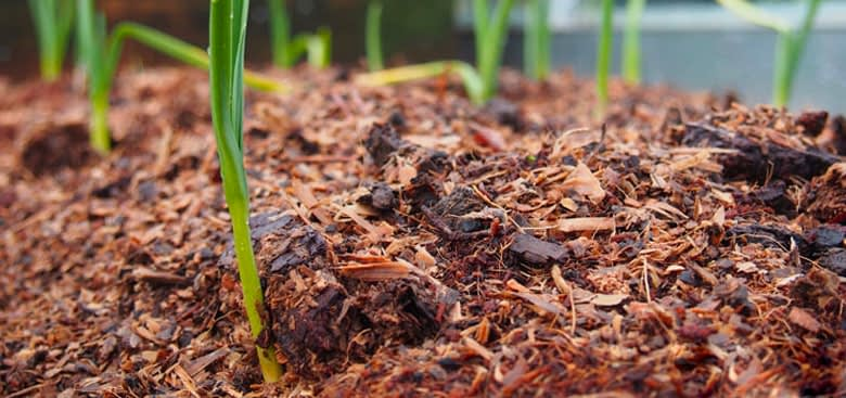 Protecting Plants From Snow Damage With Mulch