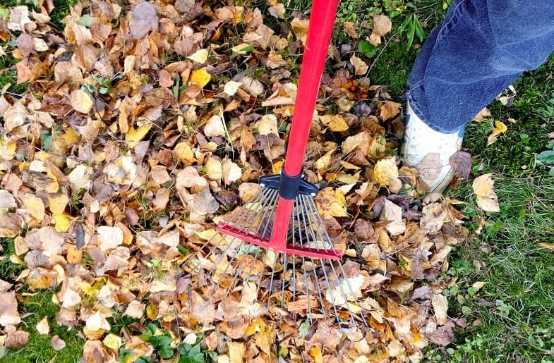 People-Also-Ask-about-Raking-Leaves
