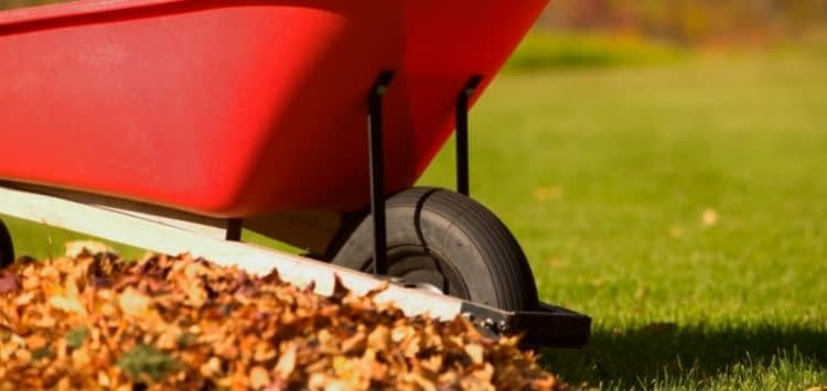 Best Way to Clean Up Leaves Like a Pro
