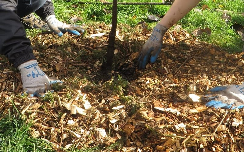How-to-Use-Your-Leaf-Mulch