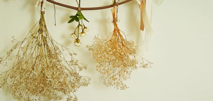 6 Ways How to Dry Leaves
