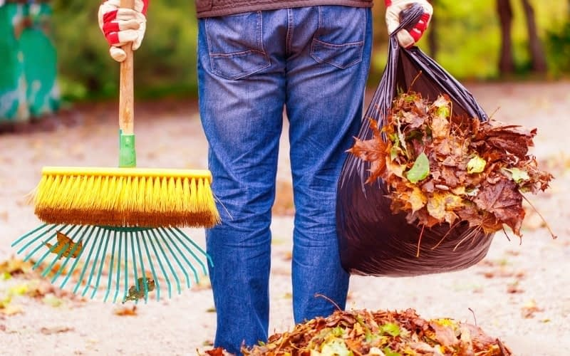 Is-it-Necessary-to-Pick-Up-Leaves