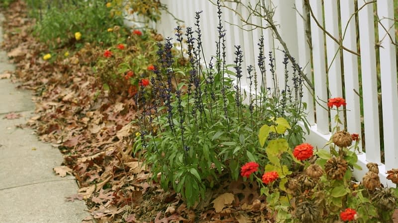 Should you Remove Leaves from a Flower Bed