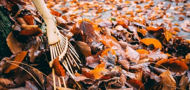 Best Way To Bag Leaves During Fall