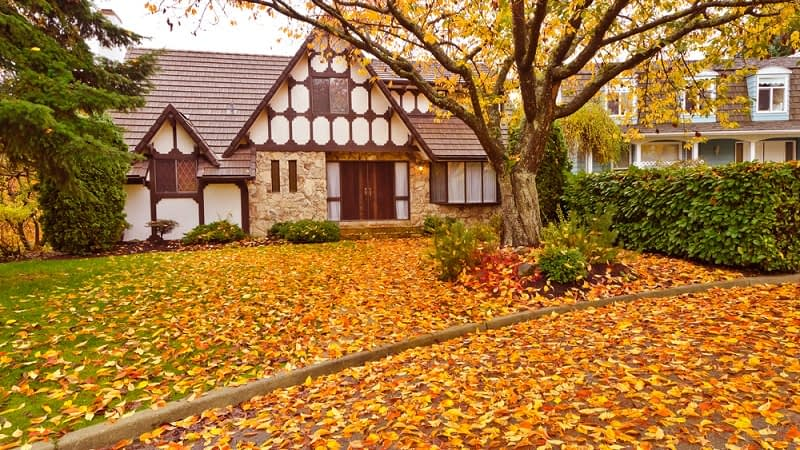 Should you Leave Leaves on your Lawn