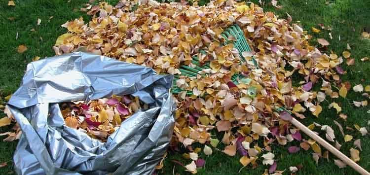 Things To Consider When Bagging Leaves